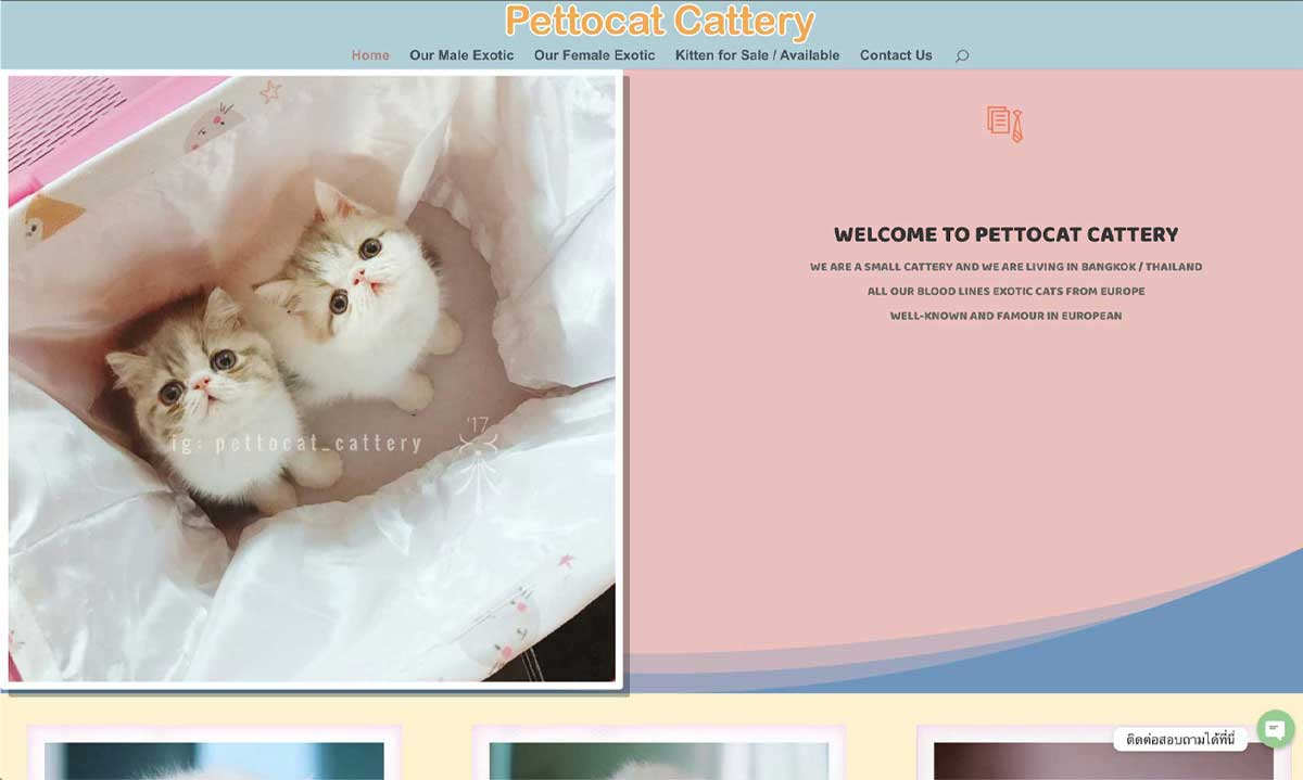 PETTOCAT CATTERY